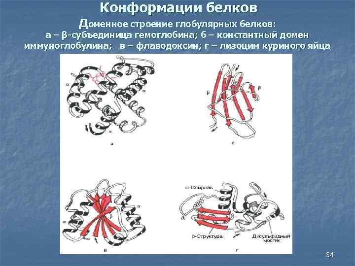 Конформации белков Доменное строение глобулярных белков: а – β-субъединица гемоглобина; б – константный домен