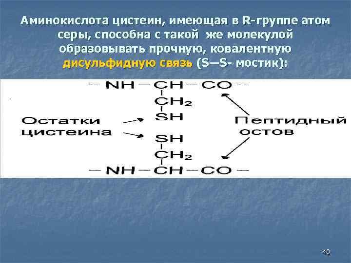 Аминокислота цистеин, имеющая в R-группе атом серы, способна с такой же молекулой образовывать прочную,