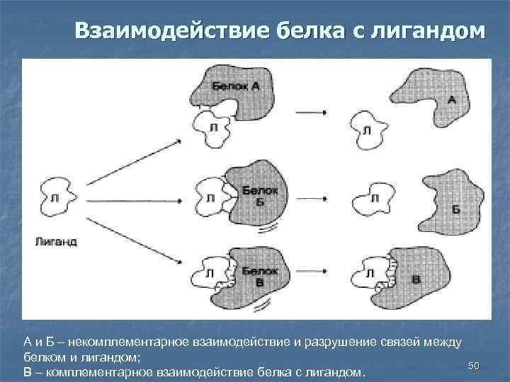 Взаимодействие белка с лигандом А и Б – некомплементарное взаимодействие и разрушение связей между