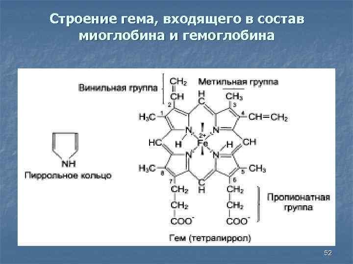 Строение гема, входящего в состав миоглобина и гемоглобина 52