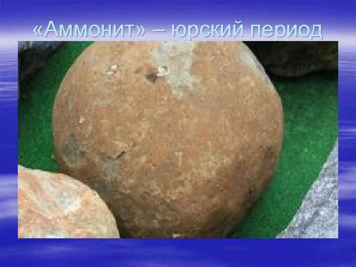 «Аммонит» – юрский период