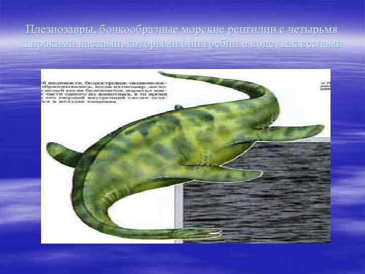 Плезиозавры, бочкообразные морские рептилии с четырьмя широкими ластами, которыми они гребли в воде, как