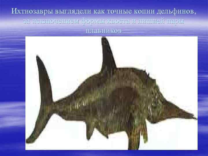 Ихтиозавры выглядели как точные копии дельфинов, за исключением формы хвоста и лишней пары плавников