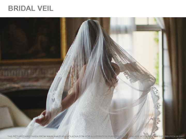 BRIDAL VEIL THE PICTURES ARE TAKEN FROM WWW. ANASTASIAWOLKOVA. COM FOR ILLUSTRATION PURPOSES ONLY