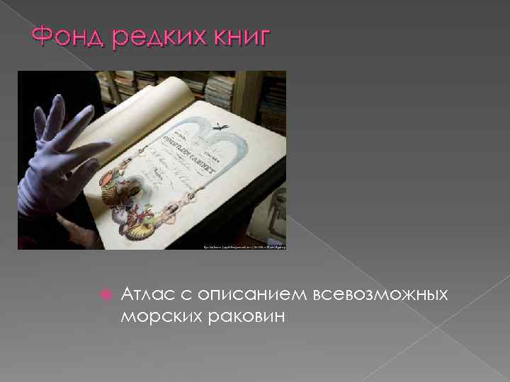 Фонд редких книг Атлас с описанием всевозможных морских раковин