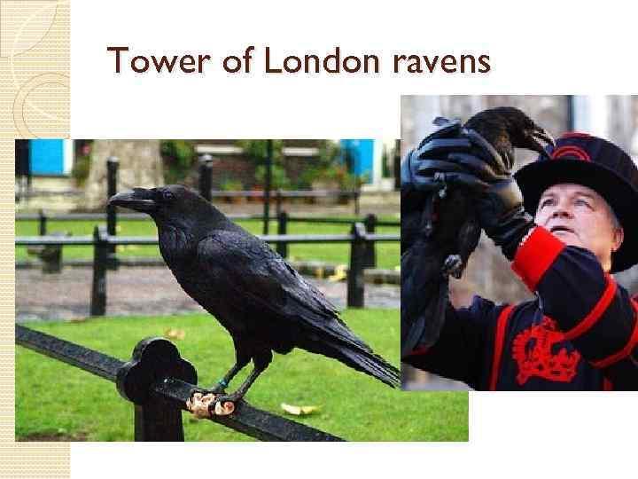 Tower of London ravens