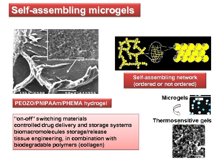"""Self-assembling microgels Self-assembling network (ordered or not ordered) PEOZO/PNIPAAm/PHEMA hydrogel """"on-off"""" switching materials controlled"""