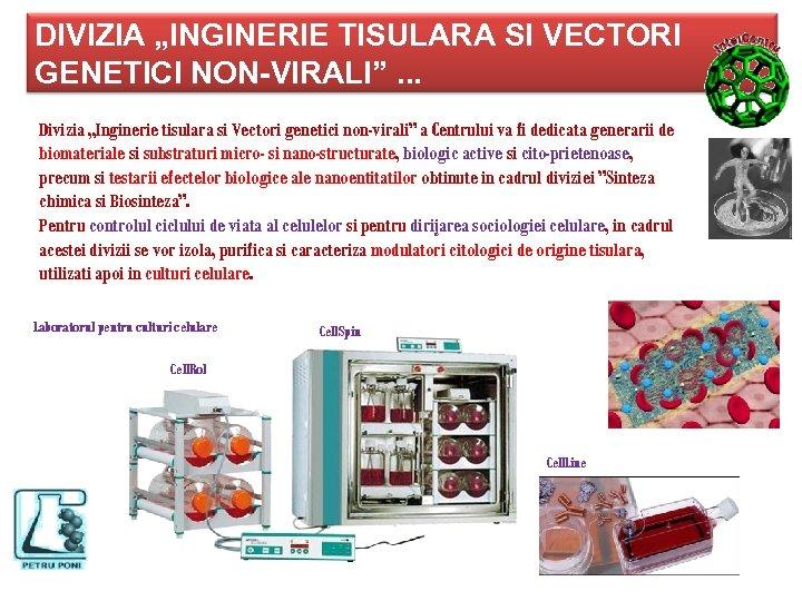 """DIVIZIA """"INGINERIE TISULARA SI VECTORI GENETICI NON-VIRALI"""". . . Divizia """"Inginerie tisulara si Vectori"""