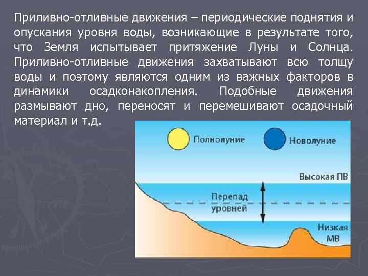 Приливно-отливные движения – периодические поднятия и опускания уровня воды, возникающие в результате того, что