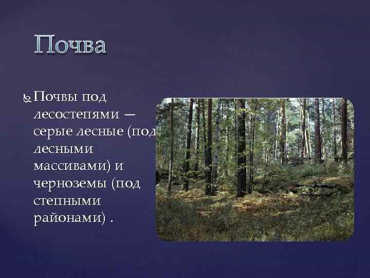 Почва Почвы под лесостепями — серые лесные (под лесными массивами) и черноземы (под степными