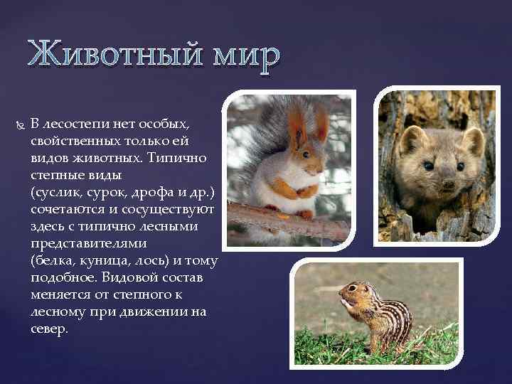 Животный мир В лесостепи нет особых, свойственных только ей видов животных. Типично степные виды