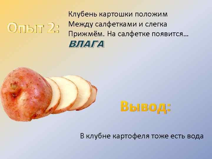 Опыт 2: Клубень картошки положим Между салфетками и слегка Прижмём. На салфетке появится… ВЛАГА