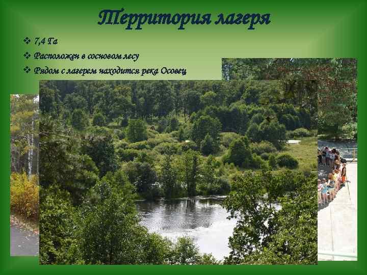 Территория лагеря v 7, 4 Га v Расположен в сосновом лесу v Рядом с