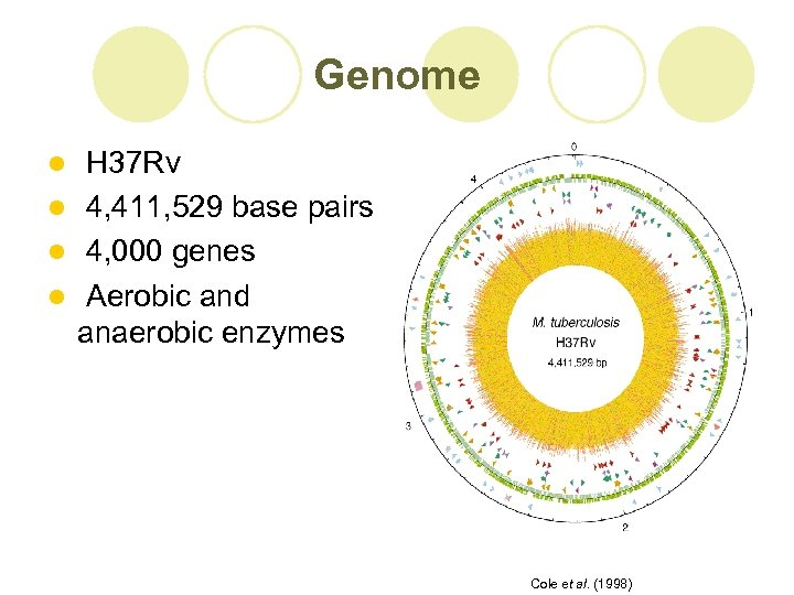 Genome H 37 Rv l 4, 411, 529 base pairs l 4, 000 genes