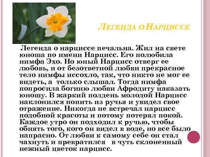 ЛЕГЕНДА О НАРЦИССЕ Легенда о нарциссе печальна. Жил на свете юноша по имени Нарцисс.