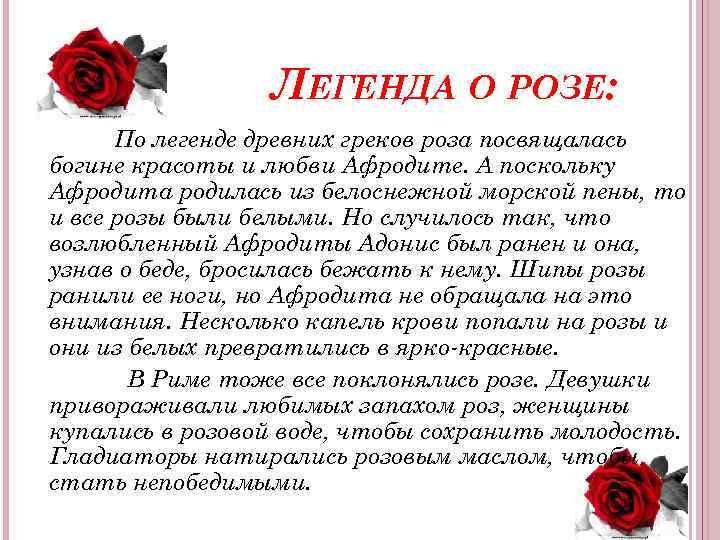 ЛЕГЕНДА О РОЗЕ: По легенде древних греков роза посвящалась богине красоты и любви Афродите.