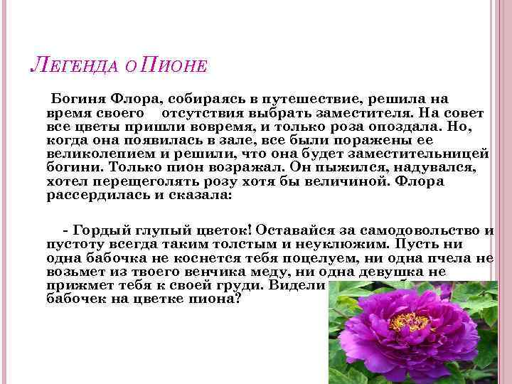 ЛЕГЕНДА О ПИОНЕ Богиня Флора, собираясь в путешествие, решила на время своего отсутствия выбрать
