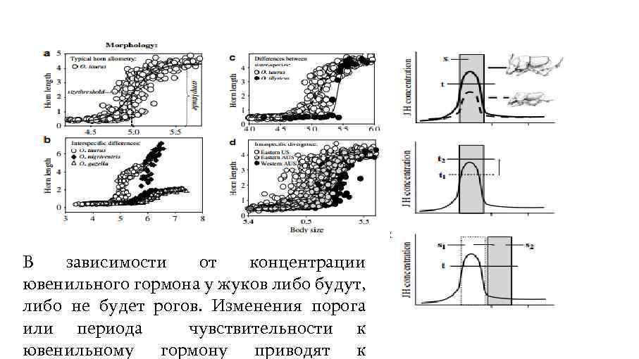 В зависимости от концентрации ювенильного гормона у жуков либо будут, либо не будет рогов.