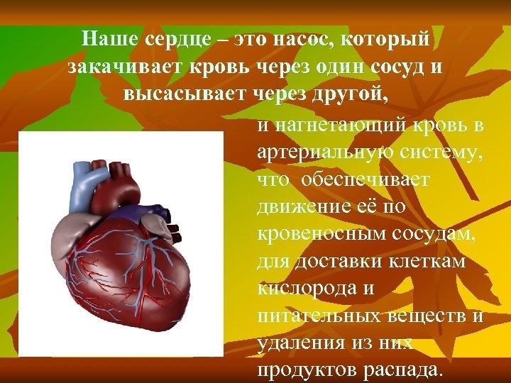Наше сердце – это насос, который закачивает кровь через один сосуд и высасывает через