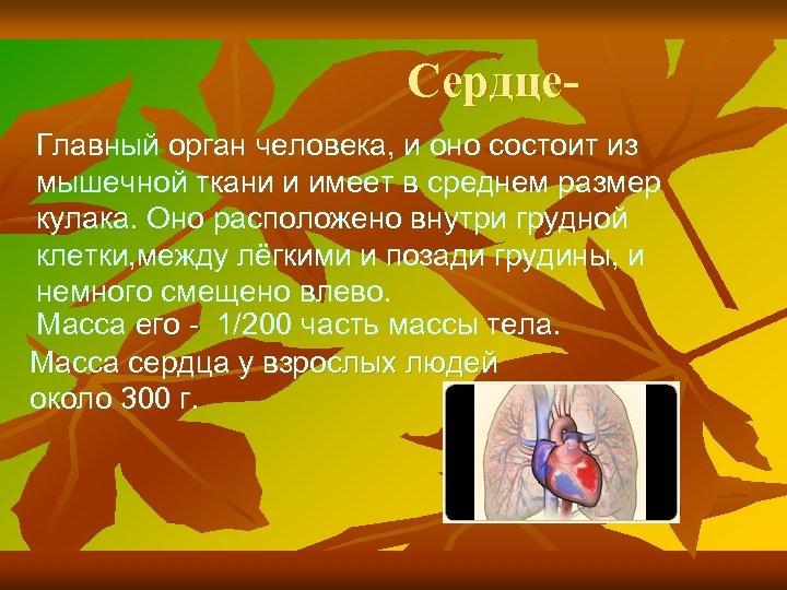 Сердце. Главный орган человека, и оно состоит из мышечной ткани и имеет в среднем