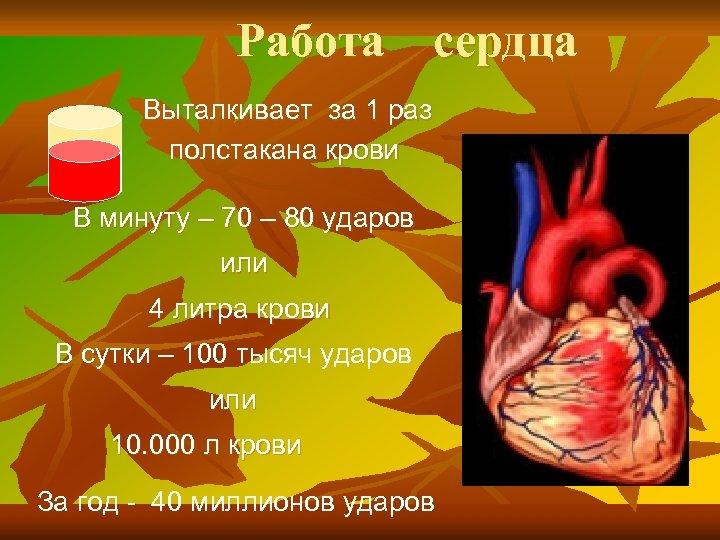 Работа сердца Выталкивает за 1 раз полстакана крови В минуту – 70 – 80
