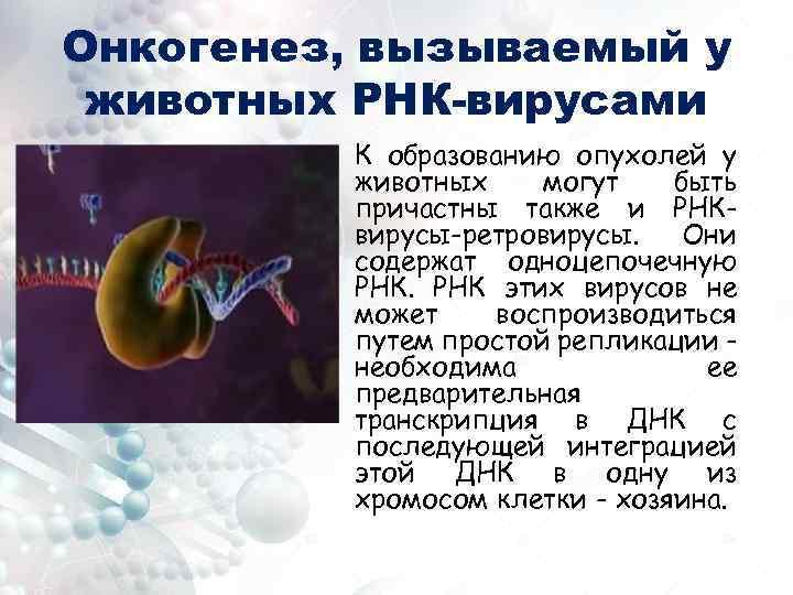 Онкогенез, вызываемый у животных РНК-вирусами К образованию опухолей у животных могут быть причастны также