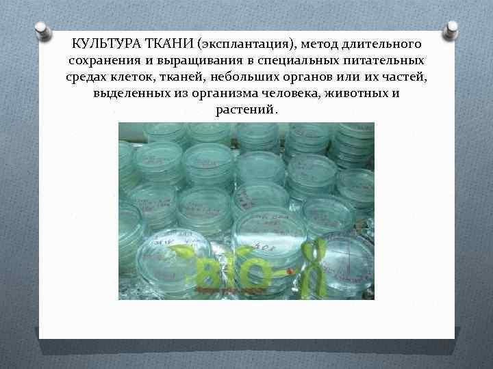 КУЛЬТУ РА ТКА НИ (эксплантация), метод длительного сохранения и выращивания в специальных питательных средах