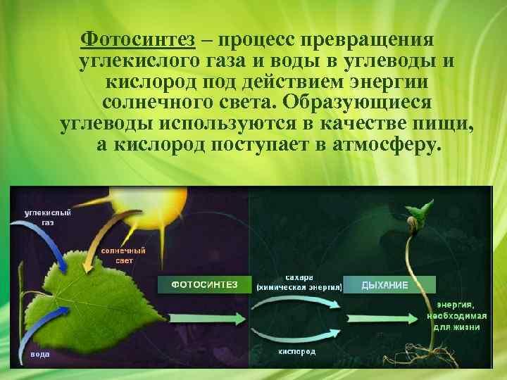 ищете фотосинтез механизм процесса добавляют шашлыку