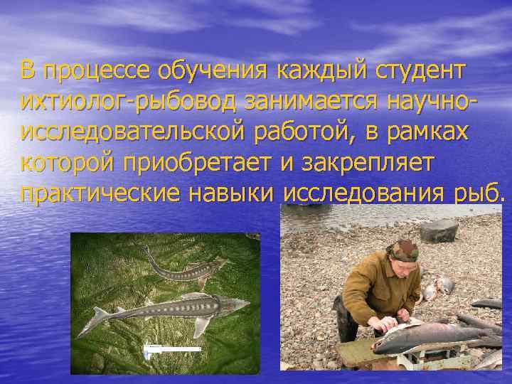 В процессе обучения каждый студент ихтиолог-рыбовод занимается научноисследовательской работой, в рамках которой приобретает и