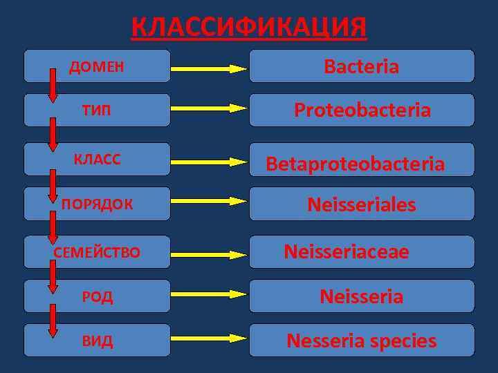 КЛАССИФИКАЦИЯ ДОМЕН Bacteria ТИП Proteobacteria КЛАСС ПОРЯДОК СЕМЕЙСТВО Вetaproteobacteria Neisseriales Neisseriaceae РОД Neisseria ВИД