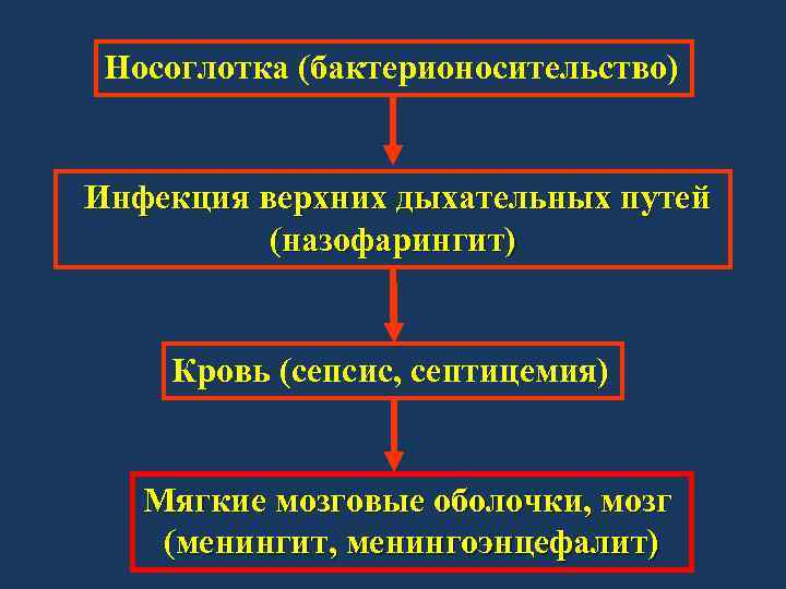 Носоглотка (бактерионосительство) Инфекция верхних дыхательных путей (назофарингит) Кровь (сепсис, септицемия) Мягкие мозговые оболочки, мозг