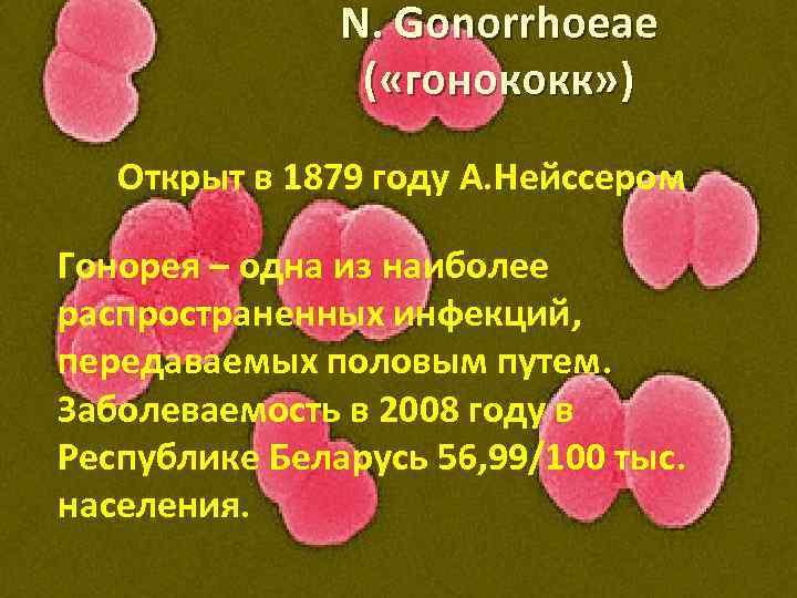 N. Gonorrhoeae ( «гонококк» ) Открыт в 1879 году А. Нейссером Гонорея – одна