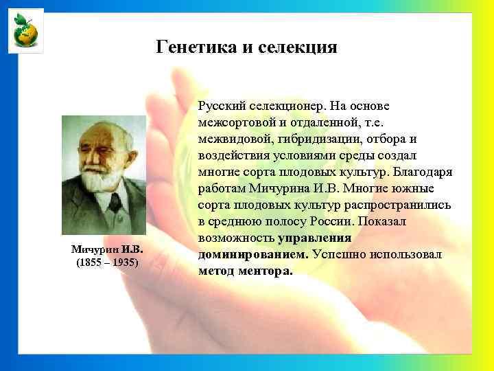Генетика и селекция Мичурин И. В. (1855 – 1935) Русский селекционер. На основе межсортовой