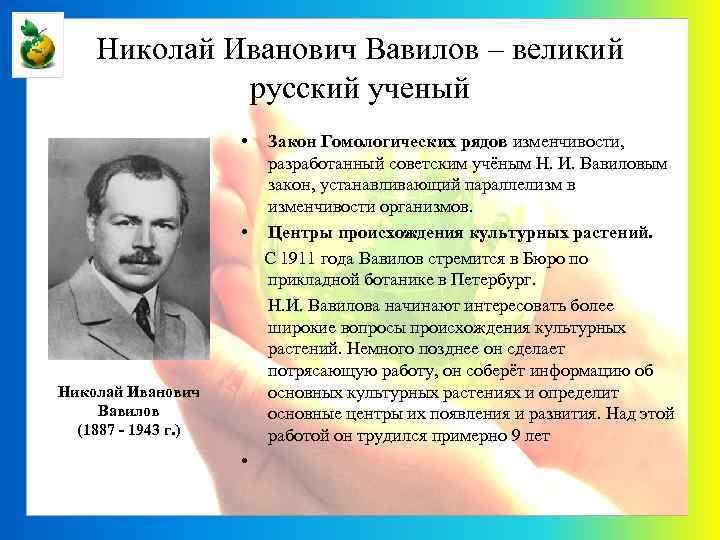 Николай Иванович Вавилов – великий русский ученый • Николай Иванович Вавилов (1887 - 1943