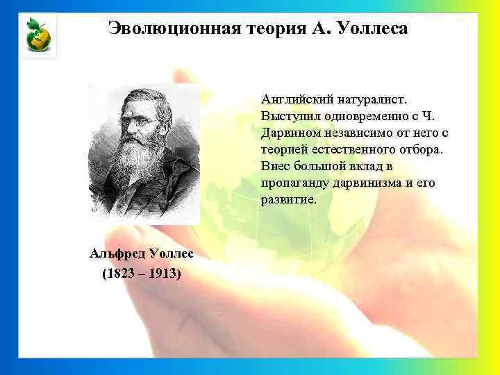 Эволюционная теория А. Уоллеса Английский натуралист. Выступил одновременно с Ч. Дарвином независимо от него