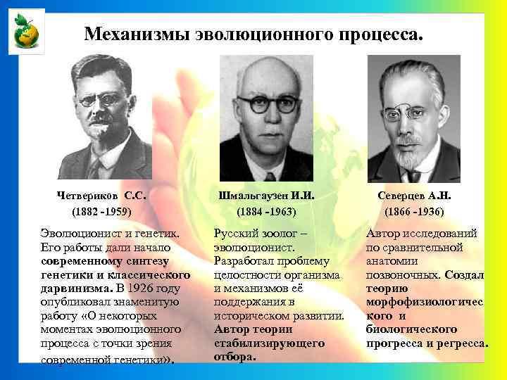 Механизмы эволюционного процесса. Четвериков С. С. (1882 -1959) Эволюционист и генетик. Его работы дали