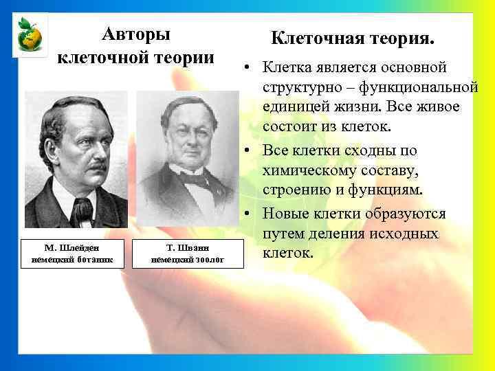 Авторы клеточной теории М. Шлейден немецкий ботаник Т. Шванн немецкий зоолог Клеточная теория. •
