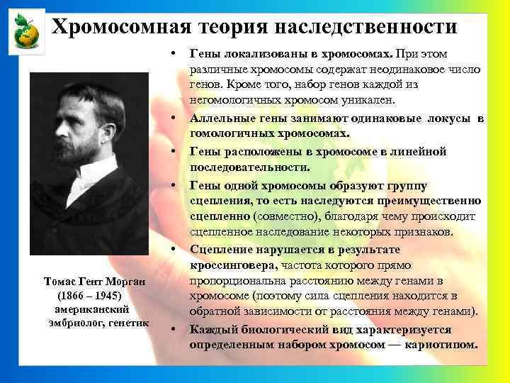 Хромосомная теория наследственности • • • Томас Гент Морган (1866 – 1945) американский эмбриолог,