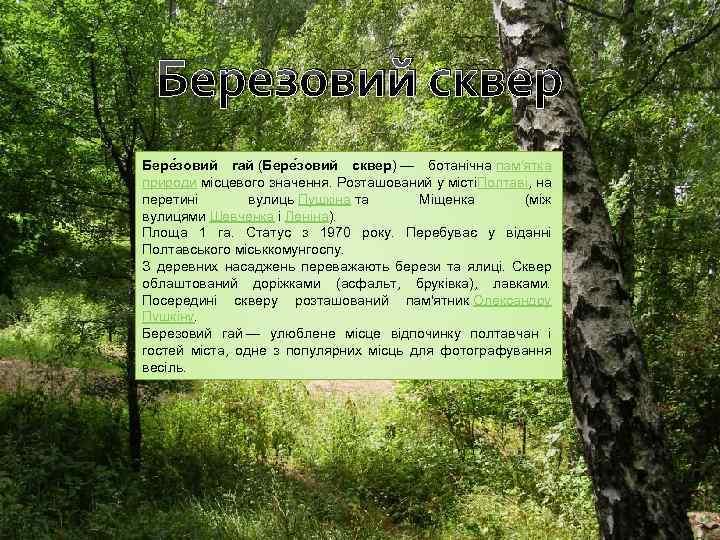 Березовий сквер Бере зовий гай (Бере зовий сквер) — ботанічна пам'ятка природи місцевого значення.