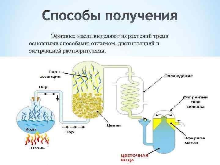 Эфирные масла выделяют из растений тремя основными способами: отжимом, дистилляцией и экстракцией растворителями.