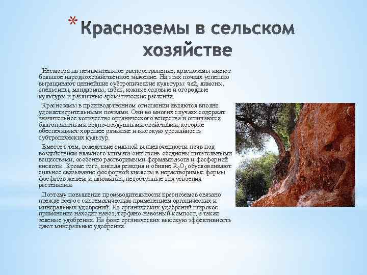 * Несмотря на незначительное распространение, красноземы имеют большое народнохозяйственное значение. На этих почвах успешно
