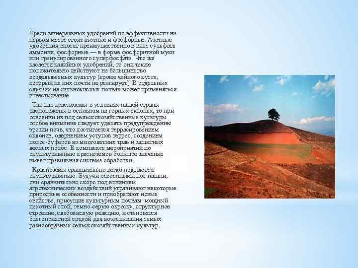 Среди минеральных удобрений по эффективности на первом месте стоят азотные и фосфорные. Азотные удобрения