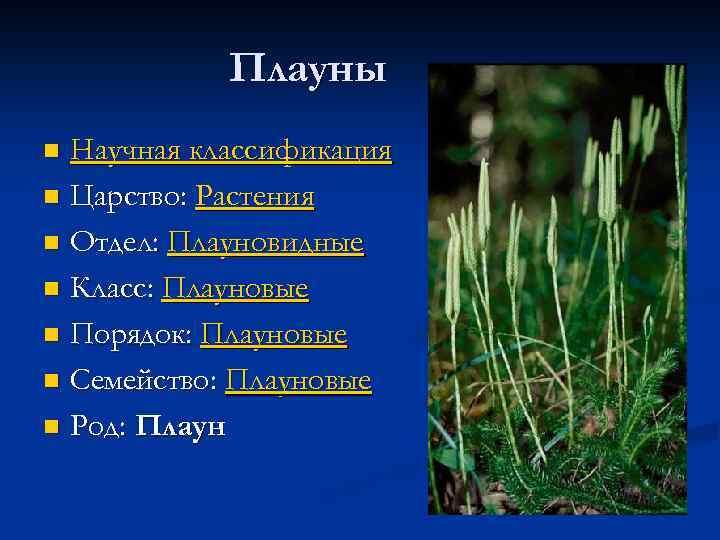 Плауны Научная классификация n Царство: Растения n Отдел: Плауновидные n Класс: Плауновые n Порядок: