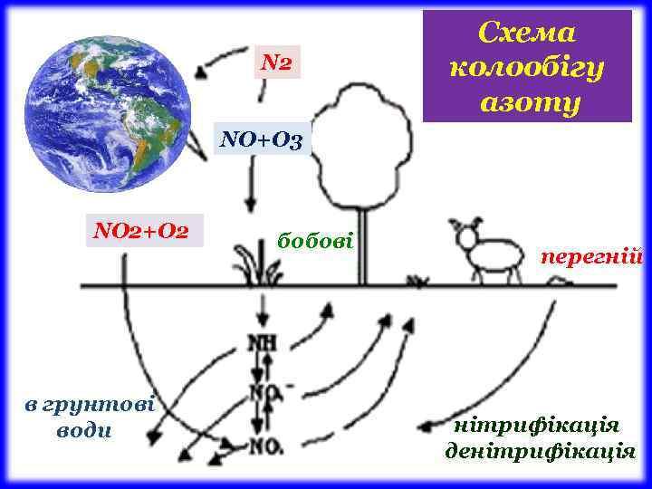 N 2 Схема колообігу азоту NО+О 3 NО 2+О 2 в грунтові води бобові