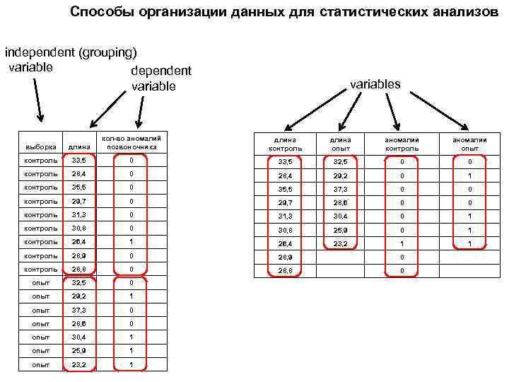 Способы организации данных для статистических анализов independent (grouping) variable dependent variables выборка длина кол-во
