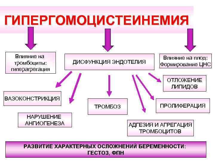 ГИПЕРГОМОЦИСТЕИНЕМИЯ Влияние на тромбоциты: гиперагрегация ДИСФУНКЦИЯ ЭНДОТЕЛИЯ Влияние на плод: Формирование ЦНС ОТЛОЖЕНИЕ ЛИПИДОВ