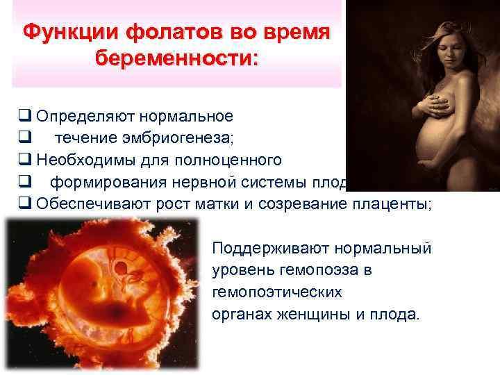 Функции фолатов во время беременности: q Определяют нормальное q течение эмбриогенеза; q Необходимы для