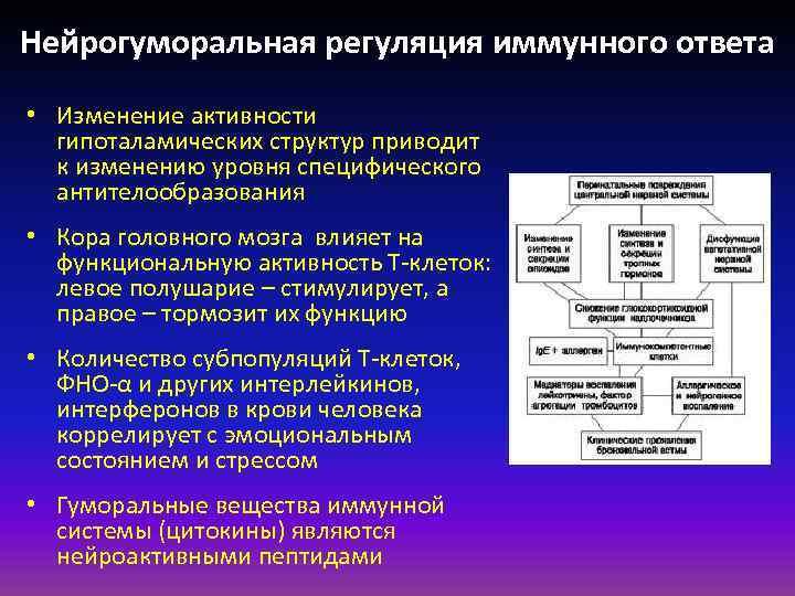 Нейрогуморальная регуляция иммунного ответа • Изменение активности гипоталамических структур приводит к изменению уровня специфического