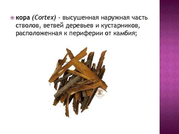 кора (Cortex) - высушенная наружная часть стволов, ветвей деревьев и кустарников, расположенная к