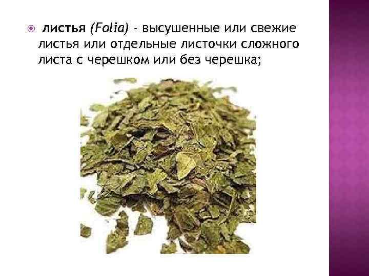 листья (Folia) - высушенные или свежие листья или отдельные листочки сложного листа с